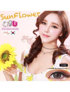 Sun Flower Brown 해바라기